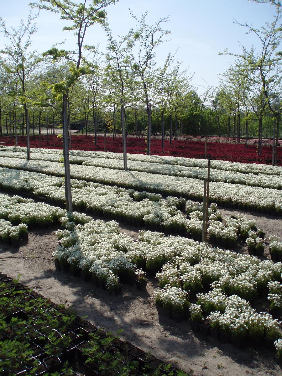 cserepes virágok értékesítése
